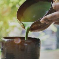 Пять фактов о матча чае : что это и зачем его пить
