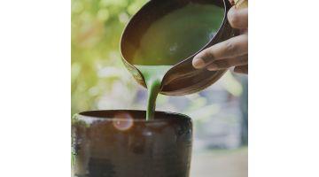П'ять фактів про матчу чаї: що це і навіщо його пити